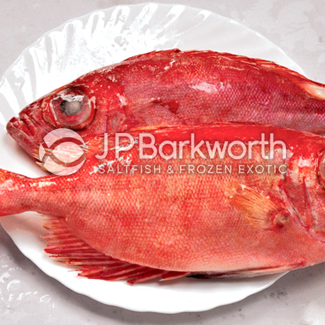 Big Eye Snapper